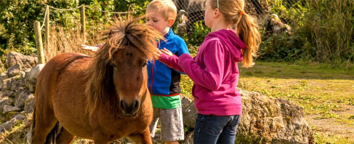 Children on a pony in the petting zoo at Eagles Flying - Irish Raptor Research Centre, Sligo, Ireland