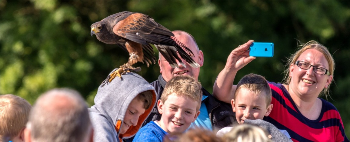 A raptor balances on a young visitor's head at Eagles Flying - Irish Raptor Research Centre, Sligo, Ireland